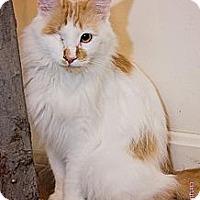 Adopt A Pet :: Jonesy - Columbia, MD