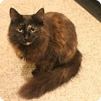 Adopt A Pet :: Lela - West Dundee, IL
