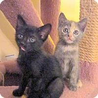 Adopt A Pet :: Sunny & Cherry - Arlington, VA
