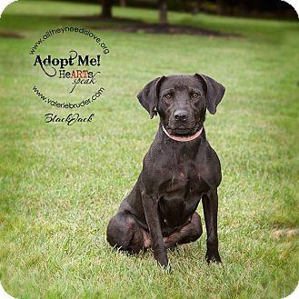 Labrador Retriever Mix Dog for adoption in Medford, New Jersey - Blackjack
