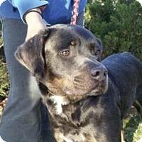 Adopt A Pet :: Jameson - Nanuet, NY