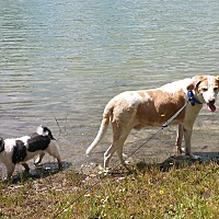 Adopt A Pet :: Lance - Malabar, FL