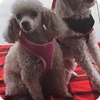 Adopt A Pet :: Ali and AJ - Kansas city, MO