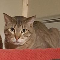 Adopt A Pet :: Jaycee - Wichita, KS