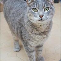 Adopt A Pet :: Feisty - Corinne, UT