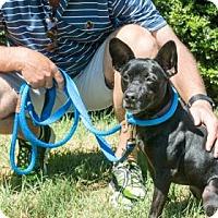 Adopt A Pet :: Lola - Suwanee, GA