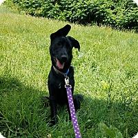 Adopt A Pet :: Rea - New Oxford, PA