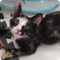 Adopt A Pet :: Annabelle - Seminole, FL