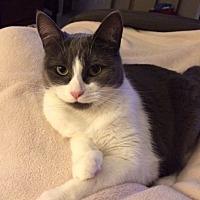 Adopt A Pet :: PhoebeCP - Carlisle, PA