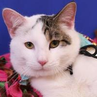 Adopt A Pet :: POOF - Slinger, WI