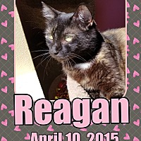 Adopt A Pet :: Reagan - Orange, CA