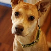 Adopt A Pet :: Maggie - Fredericksburg, VA