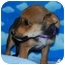 Photo 4 - Shepherd (Unknown Type) Mix Puppy for adoption in Broomfield, Colorado - 1Leonardo