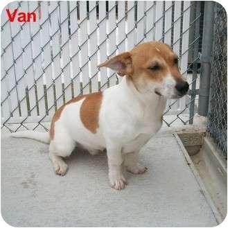 Corgi/Terrier (Unknown Type, Medium) Mix Dog for adoption in Slidell, Louisiana - Van