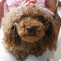 Adopt A Pet :: Stormy - Adamsville, TN