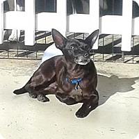 Adopt A Pet :: Devon- In CT - West Hartford, CT