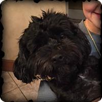 Adopt A Pet :: EMMETT - Fort Worth, TX