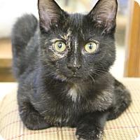 Adopt A Pet :: Cadence - Medina, OH