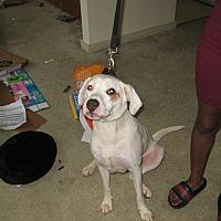 Adopt A Pet :: Bronco - Havana, FL