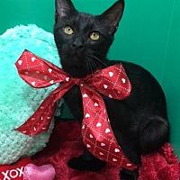 Adopt A Pet :: Rory - Houston, TX
