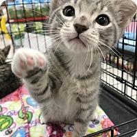 Adopt A Pet :: Coconut - Walnut Creek, CA