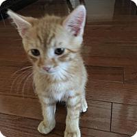 Adopt A Pet :: Nemo - Staten Island, NY