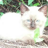 Adopt A Pet :: Michael - Lexington, KY