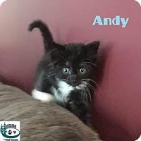 Adopt A Pet :: Andy - Fun guy! - Huntsville, ON