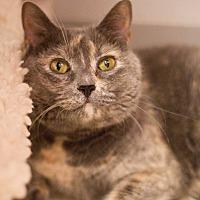 Adopt A Pet :: Bernie - Grayslake, IL