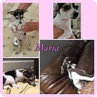 Adopt A Pet :: Maria RBF - Hagerstown, MD