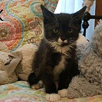 Adopt A Pet :: Tux - Zanesville, OH