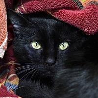 Adopt A Pet :: Kodiak - Westland, MI