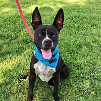 Adopt A Pet :: Dually aka Garth - San Diego, CA