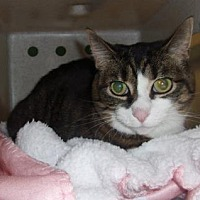 Adopt A Pet :: Maggie - Reno, NV