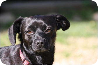 Chihuahua Mix Dog for adoption in Edmonton, Alberta - Slider