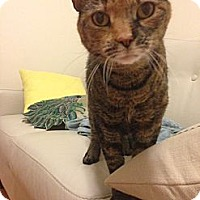Adopt A Pet :: Madeline - Brooklyn, NY