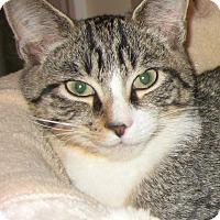 Adopt A Pet :: DONALD - 2014 - Hamilton, NJ