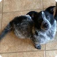 Adopt A Pet :: Baby Gino - Marlton, NJ