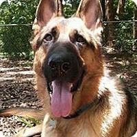 Adopt A Pet :: Legend - Green Cove Springs, FL