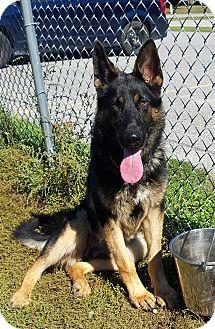 German Shepherd Dog Mix Dog for adoption in Port Hope, Ontario - Axel