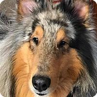 Adopt A Pet :: Splash - Powell, OH