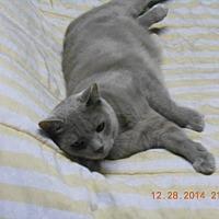 Adopt A Pet :: BUFFY - Brookhaven, PA