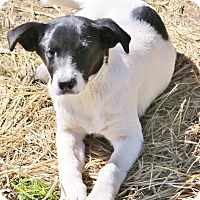 Adopt A Pet :: Thelma in CT - East Hartford, CT