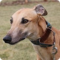 Adopt A Pet :: Braska Lupe (Lupe) - Carol Stream, IL