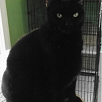 Adopt A Pet :: Mitzi - Medway, MA