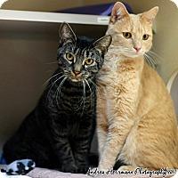 Adopt A Pet :: Nermal & Loki - East Hartford, CT