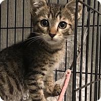 Adopt A Pet :: Pompano - East Brunswick, NJ