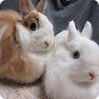 Adopt A Pet :: Eloise & Lanie - Newport, DE