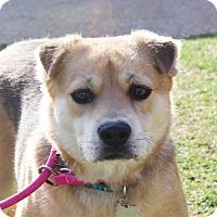 Adopt A Pet :: Kelsey - Marion, AR