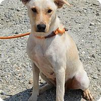 Adopt A Pet :: Brooklyn - Southbury, CT